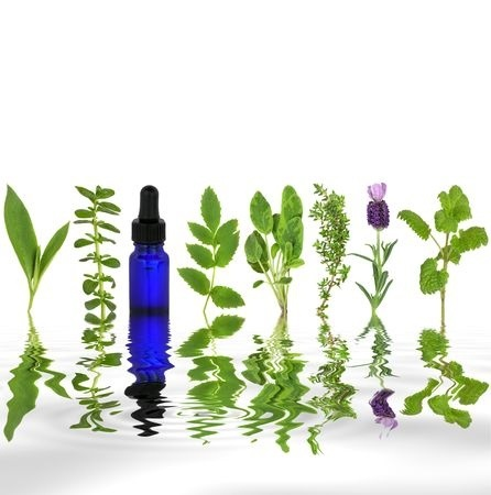 5992847 - herb leaf selection of comfrey, peppermint, valerian, sage, thyme, lavender and lemon balm with an aromatherapy essential oil glass dropper bottle with reflection in rippled grey water, over white background.